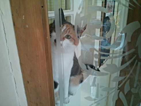 Callie cat at the door