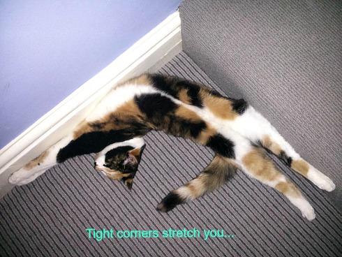 Cat in a tight corner