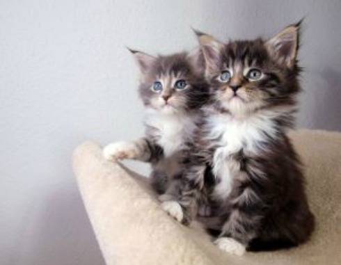 Cats listening hard! johnnyberg Stck xchge