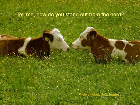 Cows talking