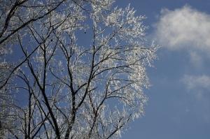 Iced tree by Velma