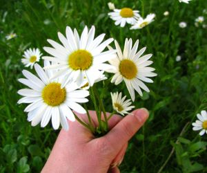 daisies to say thanks
