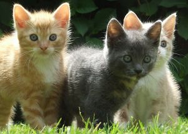 kittens-by Sander 19 2